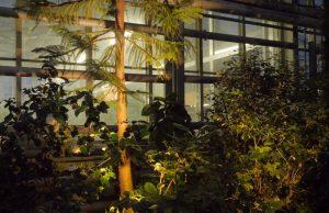laistymas-botanikos-sodo-apsvietimas